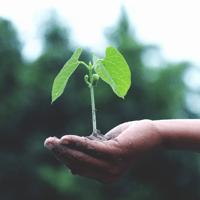 Organizaciones-proposito-medioambiental